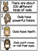Owls - True or False