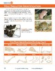 Owls and Owl Pellet Dissection Resource Guide