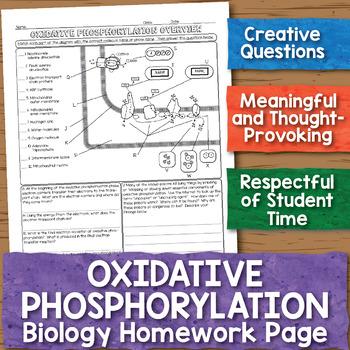 Oxidative Phosphorylation Biology Homework Worksheet