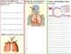 P.E Differentiated Task - Respiratory System