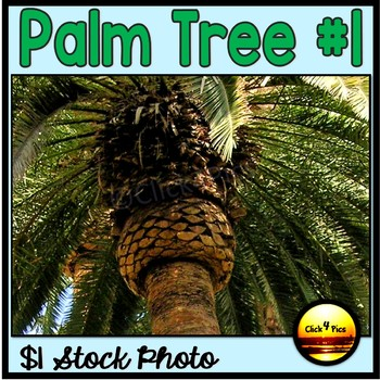 PALM TREE $1 Stock Photo  #1