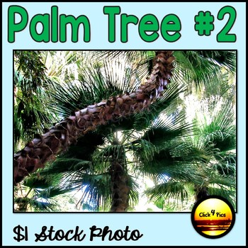 Picture of PALM TREE $1 Stock Photo