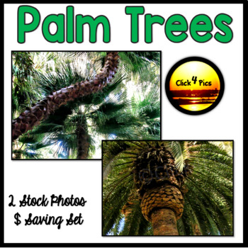 PALM TREE Pictures for Tropical Plant Units