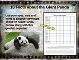 PANDA BEAR: 10 facts, engaging PPT, links, free graphic organizer)