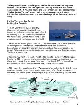 PARCC Test Prep Research Task Sea Turtle Bundle Part 2