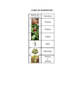 PARTES DE LA PLANTA  Un juego de pares de memoria