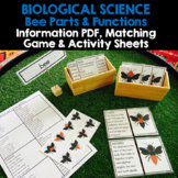 PARTS & FUNCTIONS OF A BEE - Info PDF, Matching Game & Activity Sheets
