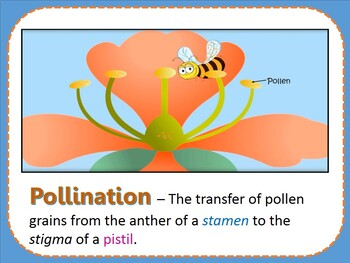 PARTS OF A FLOWER PPT. (6th Graders)