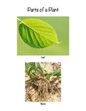 PARTS OF A PLANT VOCAB CARDS- hands on visuals for teaching/learning!