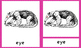 PARTS OF THE ANTEATER 3-PART NOMENCLATURE MONTESSORI CARDS SOUTH AMERICA UNIT