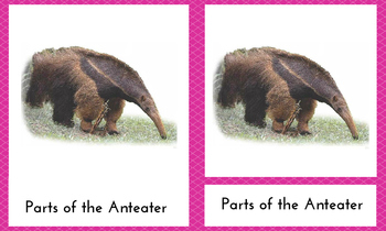 PARTS OF THE ANTEATER 3-PART NOMENCLATURE MONTESSORI CARDS SOUTH AMERICA UNIT