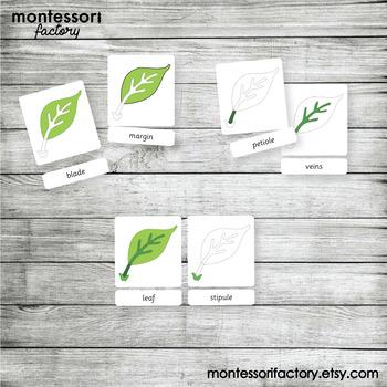 PARTS of a LEAF | MONTESSORI Printable Nomenclature Three Part Cards