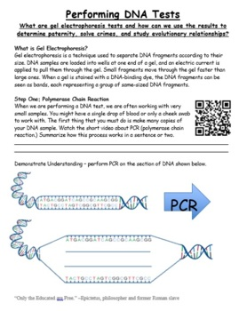 PCR / Gel Electrophoresis Practice Worksheet