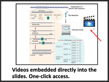 PCR and Gel Electrophoresis - A Senior Biology PowerPoint Lesson & Notes