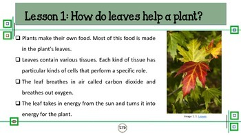 PDF 5th Gr Life Science Chapter 4 Plants Scott Foresman