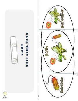 PDF Animal Cell Anatomy Printables, Worksheets for Interactive Science Notebooks