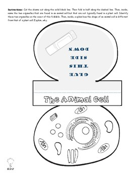 Animal Cell Anatomy Printables & Worksheets for Interactive Science Notebooks