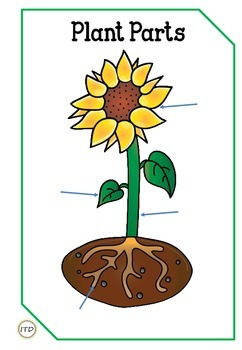 PDF Plant Parts Flashcards with QR Codes