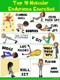 PE Poster: Top 10 Muscular Endurance Exercises