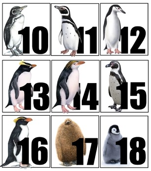 PENGUIN Themed Calendar Numbers & Math Tub Pieces