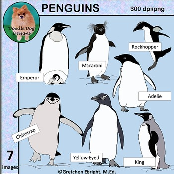 PENGUINS - CLIP ART - GRAPHICS