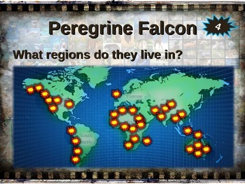 PEREGRINE FALCON: 10 facts. Fun, engaging PPT (w links & free graphic organizer)