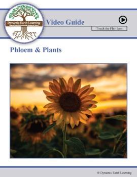 PHLOEM: FuseSchool Biology Video Guide