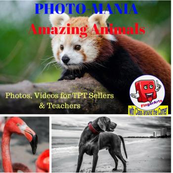 PHOTOMANIA: AMAZING ANIMALS Photos and Videos