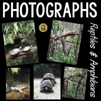 PHOTOS - REPTILES AND AMPHIBIANS