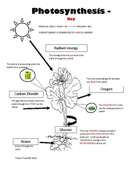 PHOTOSYNTHESIS Diagram Notes