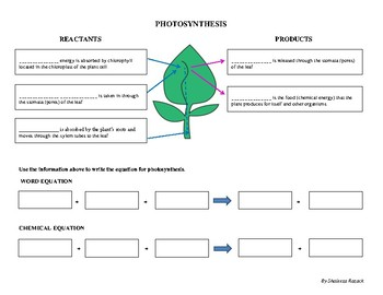 photosynthesis worksheet tpt. Black Bedroom Furniture Sets. Home Design Ideas