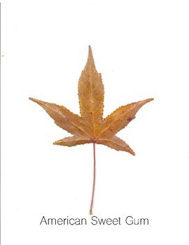 PreK Introduction to Science Lesson: Fall Leaves