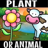 PLANT OR ANIMAL