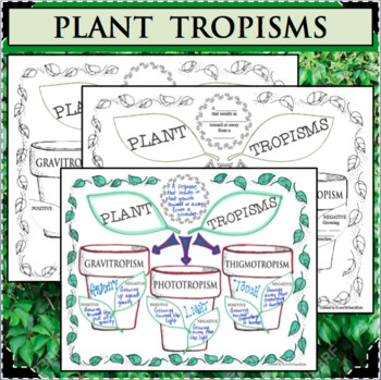 PLANT TROPISMS Interactive Notes Differentiated Life Science Biology Plants