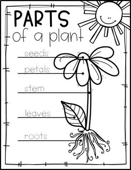 PLANTS UNIT FOR PRESCHOOL, PRE-K AND KINDERGARTEN