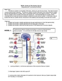Group Activity on The Nervous System