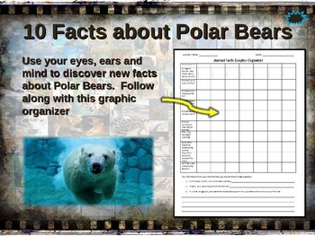 POLAR BEAR: 10 facts. Fun, engaging PPT (w links & free gr