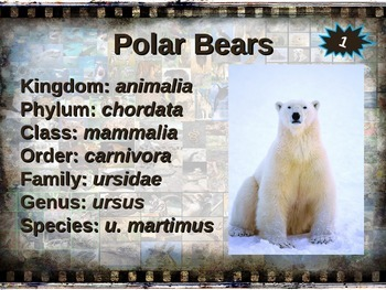 POLAR BEAR: 10 facts, engaging PPT, links, free graphic organizer)
