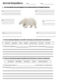 POLAR BEAR Adaptations Worksheet | Year 5 Science (ACSSU043)