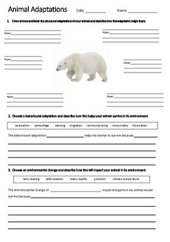 POLAR BEAR Adaptations Worksheet   Year 5 Science (ACSSU043)