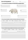POLAR BEAR Adaptations Worksheet | Year 5 Science (ACSSU043)
