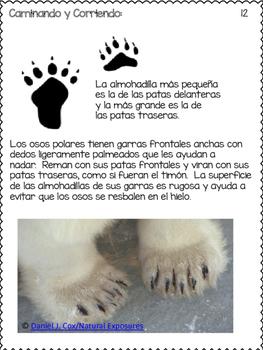 POLAR BEARS IN SPANISH