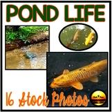 POND Aquatic Animals STOCK PHOTOS