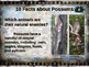 POSSUMS - visually engaging PPT w facts, video links, handouts & more