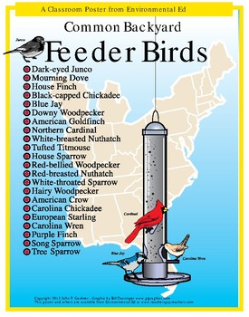 POSTER - Common Feeder Birds
