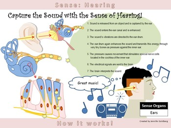 POSTER: Sense of Hearing: Simple Version (Sense Organs - Ears)