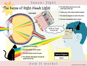 POSTER: Sense of Sight: Simple Version (Sense Organs - Eyes)