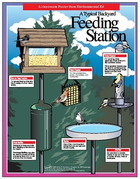 POSTER - Typical Bird Feeding Station