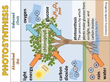 POSTERS: Photosynthesis