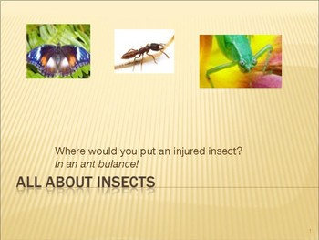 PPT- All About Insects
